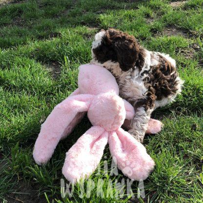 szeleszczący królik dla psa